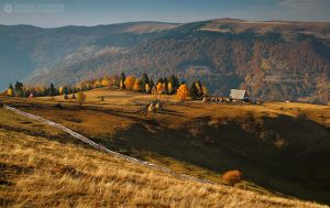 Autumn colors in Apuseni Mountains 24 by adypetrisor