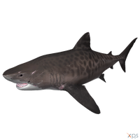 The Depth - Tiger Shark by MrUncleBingo