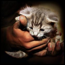 The Gardener's Kitten by lucias-tears