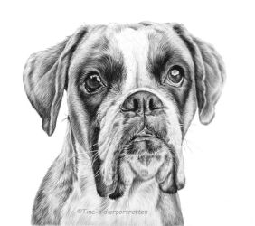 Boxer girl in graphite by LeontinevanVliet