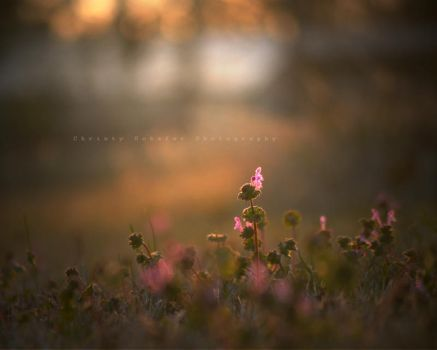 missing the southern warmth by knowhopeinme