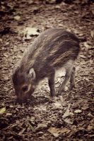 Warty Pig by IvoryRose3711