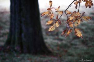 Fall detail. by Phototubby