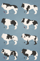 Premade Piebald - All Sold by DragonHaze