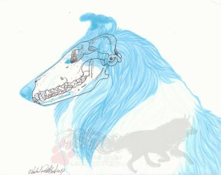 Rough Collie by NightTracker