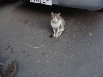 Day in the Life Posing Cat by anumkhan