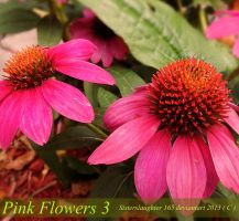 Pink Flowers 3 by Sisterslaughter165