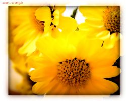 yellow by thatIam