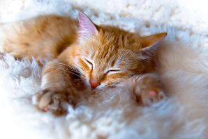 my sweet sleeping lion by Fruzsee