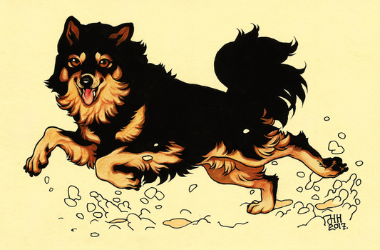 Finnish Lapphund by CanisAlbus