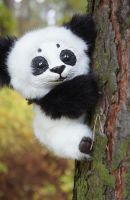 Little Panda! by Werdiga