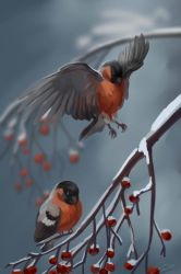 The bullfinches by Night-Owl-23