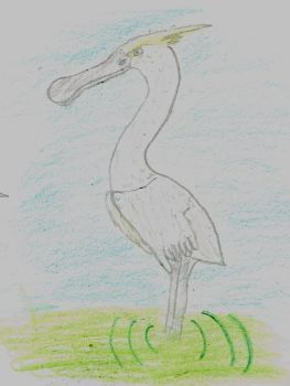 yellow crested spoonbill by archeoraptor38