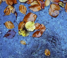 Wet Leaves on Stone by danhortonszar