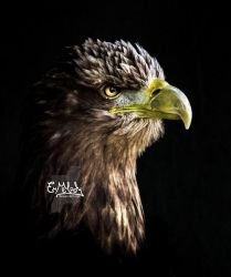 The Eagle by EmMelody