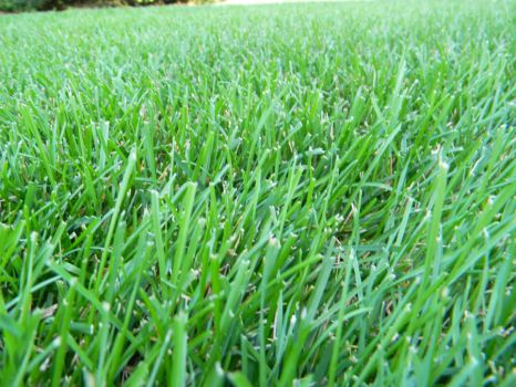 green grass by trista25
