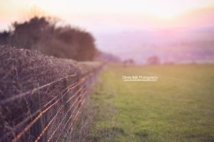 Sun-kissed Hedges - Day 230 by escaped-emotions