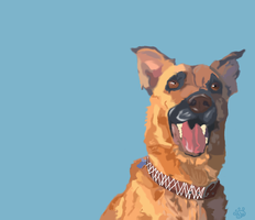 German Shepard by maxst5011