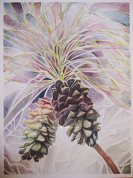 Pinecones Watercolour by AppleLove
