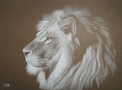 Lion by Colombina