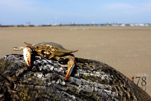 there's no need to be crabby by ShannonReiswig