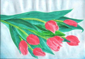 Tulips by saysly