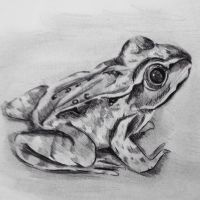 Frog by camilleroc