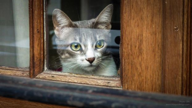 Curious from the window by ludomatico