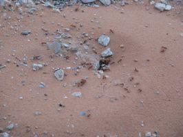 00177 - Red Ant Hole by emstock
