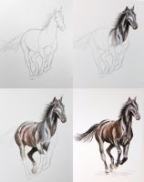 Watercolour Painting of a Horse in Stages by christina-0o