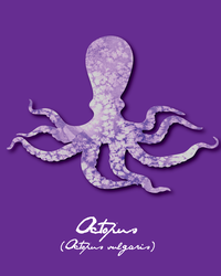 Pride Month - Purple (Octopus) by Catlore