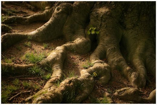 Of Roots and Fairytales by DennisChunga