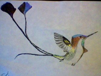 Marvelous Spatuletail Hummingbird by Chaos--Flame