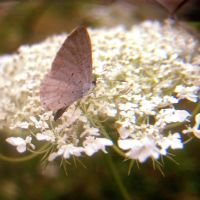 Moth by Couleur345