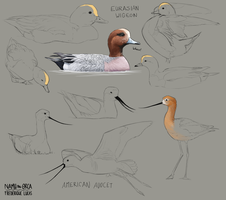 Celebratory wigeons and avocets by namu-the-orca