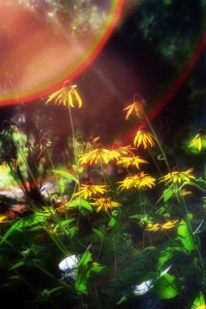 Flower Of The West by woodfaery