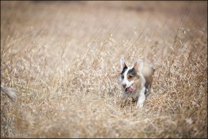 Get a long lil' doggie by XetsaPhoto