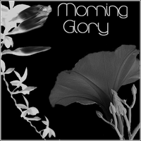 Morning Glory by butnotquite