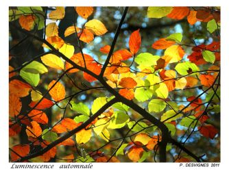 autumnal luminescence by bracketting94