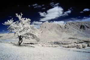 THE ROCK by Konczey-Zsolt