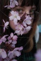 Sakura Flowers as a Shield by theLindah