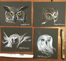335- 4 Owl Sketches by Lucky978