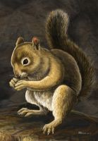 Squirrel - close up by Bisanti