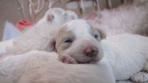 Puppies, tired by wellgraphic
