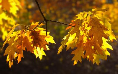Yellow October I by starykocur
