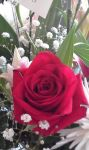 Red rose by MyLoveForYouEternity