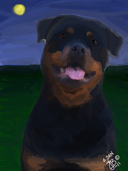 ROTTWEILER by inmydirection