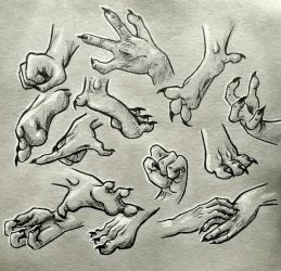 Gargoyle/Dragon hand and foot study by HollyRoseBriar