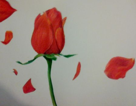 Roses: Getting back to drawing by LE-official