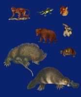 Vict pack 21-animals_quaddles by quaddles